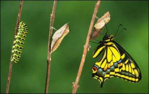 copy-butterfly.jpg